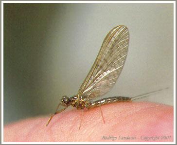 La mosca: una existenciaefímera (2/4)